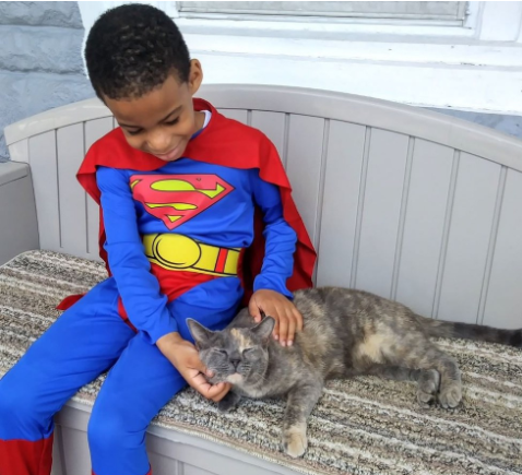 野良猫たちと瞬時に心を通わせる5歳の少年は、誰よりも野良猫たちに信頼されている猫のヒーロー