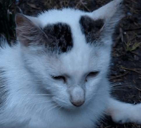 彼の家に通ってきていたやせっぽちの小さな母猫が覚悟を決めて4匹の子猫を連れて来た
