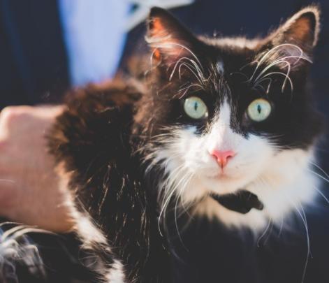 シェルターから引き取ったタキシード猫と一緒にバージンロードを歩いた花嫁の最高の笑顔