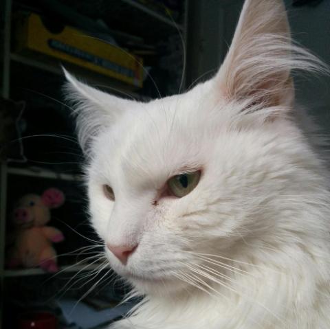 『ペットにするにはあまりにも攻撃的です。』シェルターで1週間後の安楽死を待っていた猫を迎え入れた家族