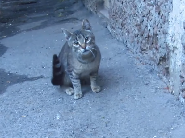 彼が子猫を助ける間、食い入るように見守っていた母猫。アパートの床下で暮らす野良猫の親子。