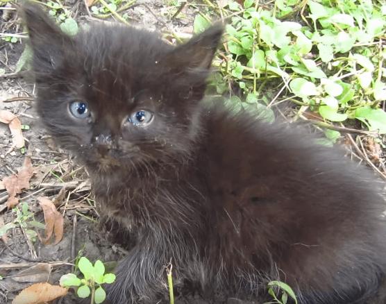 夏のある日、通りでひときわ大きな声で鳴いている子猫を見つけた彼とご飯をごちそうになった子猫