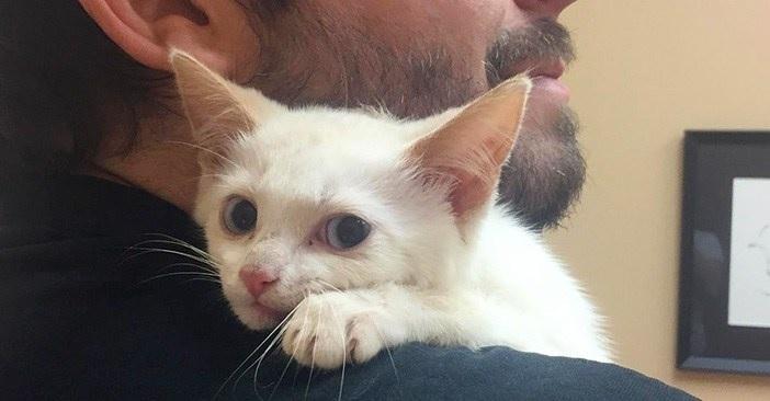 せつなすぎる!!母猫に2度も見捨てられ傷ついた子猫。保護されて傷心の子猫が初めて知ったハグは最高の宝物!