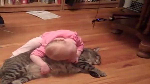 やっぱり最強コンビ!!くつろぐ猫ちゃんに構ってほしくて仕方がない赤ちゃん