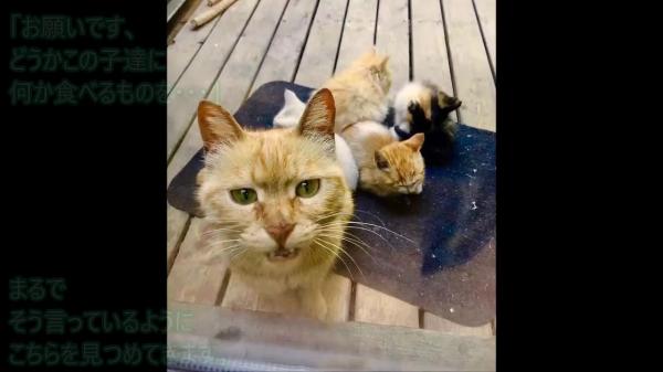 「7匹の子猫達にごはんを…」窓から懇願する野良の母猫。自分を犠牲にしてでも子を思う母の愛情の深さはとても大きいものでした。