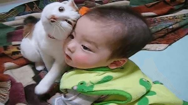 赤ちゃんが愛しすぎて仕方がない猫ちゃん!でも、赤ちゃんはあまり構ってほしくないみたいですww