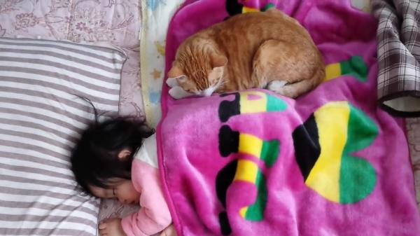 苦手だけど本当は赤ちゃんと仲良くしたい猫ちゃんがそっと添い寝をしていました♪