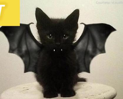 「Happy Halloween!」ハロウィンの仮装どうする??猫ちゃん達のハロウィンの仮装いろいろ詰め合わせ♪♪