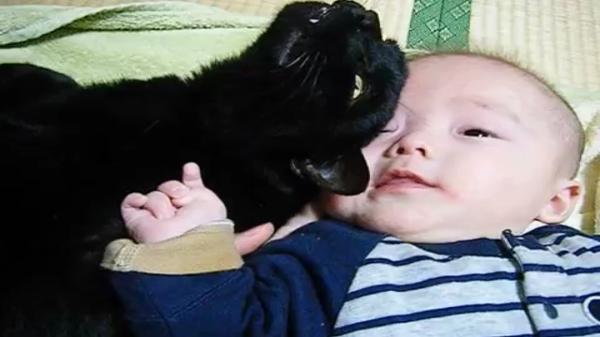「にゃんてこった!」ナデナデすりすり甘えていた相手が飼い主さんだと思ったら赤ちゃんだった事に気づいた兄貴分の猫ちゃんの反応が笑えるww