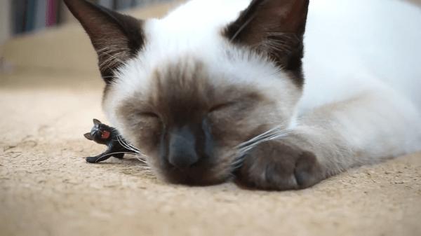 猫ちゃん達のおしくらまんじゅう!?眠っていたら猫ちゃんに挟まれちゃった猫ちゃんww