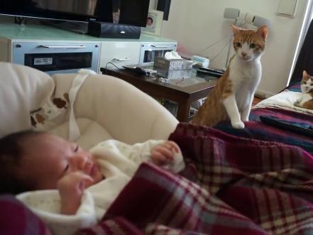 新しい家族が増えた猫ちゃん達!はじめて見る人間の赤ちゃんにビビりながらも興味津々ですww