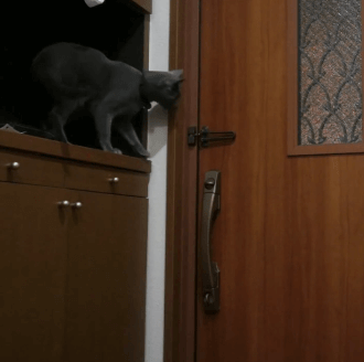 鍵閉めにゃんこ!!飼い主さんが玄関のドアを開けようと思ったら…まさかの閉め出し!?