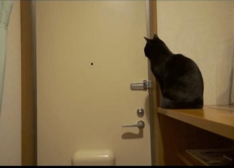 「寂しいにゃ〜…」お出かけした飼い主さんの帰りをひたすら玄関のドアの前で待ち続けた猫ちゃんがとった行動がひどかったww
