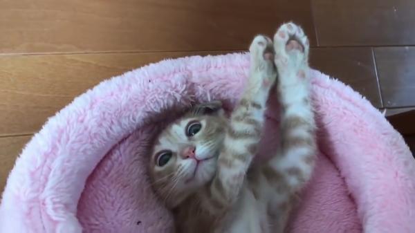 変な寝方ばかりする子猫の変な寝方だけをまとめてみたら可愛すぎた♡