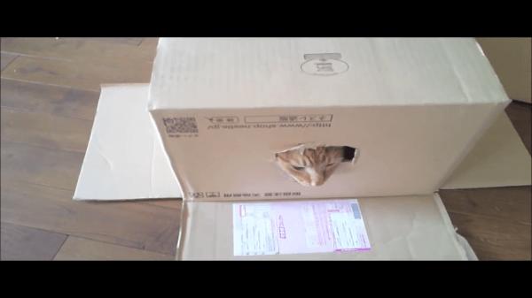 オチに爆笑wwwダンボール箱の中でまったりしていた猫ちゃん!お兄ちゃん猫にちょっかいを出されてまったりできにゃいので、パタンと蓋を閉めちゃいましたw