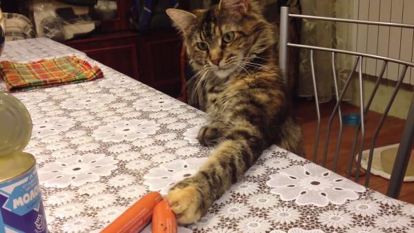 ソーセージを盗もうとする猫ちゃん…バレそうになった時のおとぼけ顔が可愛すぎ(笑)