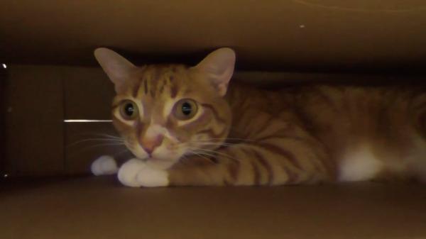 箱に入るのが好きな猫ちゃんたち(笑)どんな箱にだってとりあえず入ってみるにゃ!!