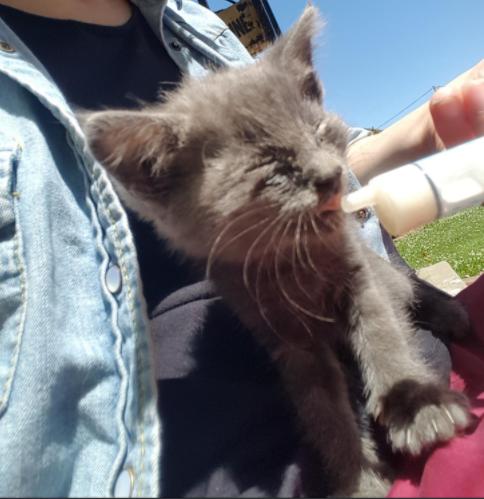 家族が駐車場で見つけた目を腫らした小さな子猫。シェルターに助けを求めようと思っていたけれど・・・