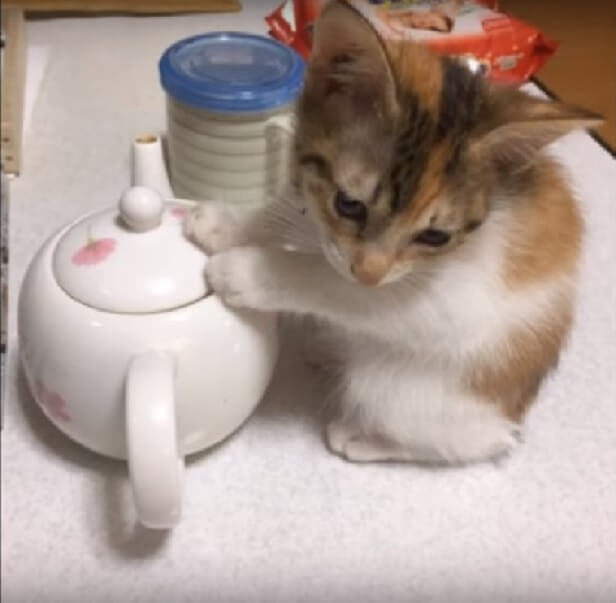 ネコさんって賢い!暖房を消したらネコのとった想定外な行動に唖然!でも笑った♪みんなよく知ってるねWW