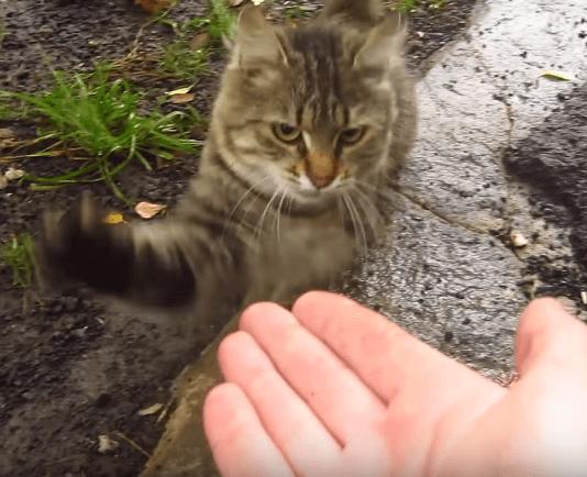 顔見知りの野良猫はいつも彼に会うと肉球猫パンチで彼流の挨拶をしてくれるようになった!