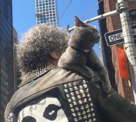 生後1か月、はじめてのお散歩に連れて行ったお父さん。猫はお父さんと行く長い散歩が大好きになった!