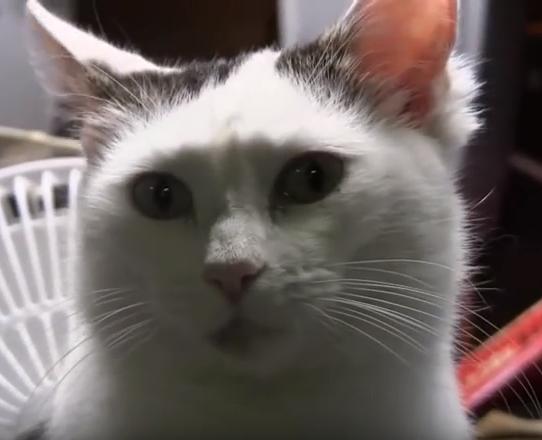 私と暮らす猫はかつて野良猫で4匹の子猫を育てる偉大な母だった。そして、いろいろあった1年後。