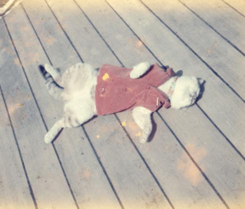 日本でただ1匹南極で越冬した三毛猫のたけし。誰よりも昭和基地を愛した観測船宗谷の守り神