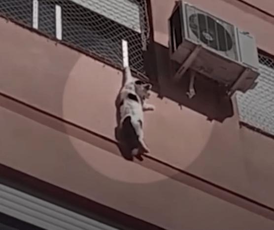 『だれか、たすけてぇ~!!』ビルの4階の窓にぶら下がって身動きがとれなくなってしまった猫。