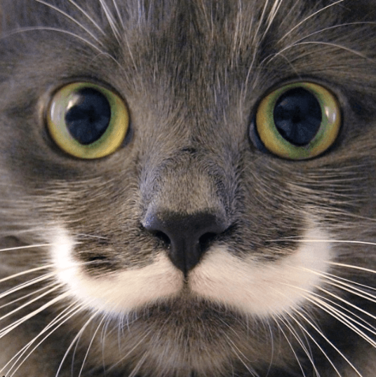 施設のボランティアスタッフが誰も引き取る人はいないと思っていた子猫、なのに心を奪われた彼。