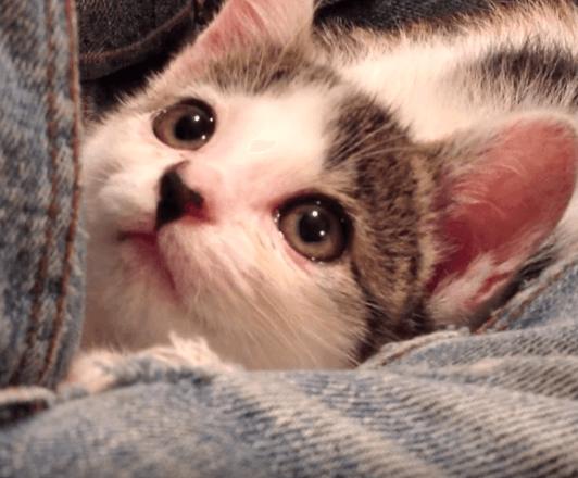 両目が塞がった子猫を保護した家族の1か月。鎌倉へ旅立った子猫が家族に残してくれたもの