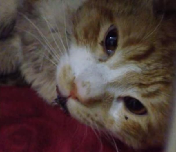 負傷して高速道路のフェンスにしがみつき怯えて鳴いていた猫を、危険を顧みずにたすけに向かった彼