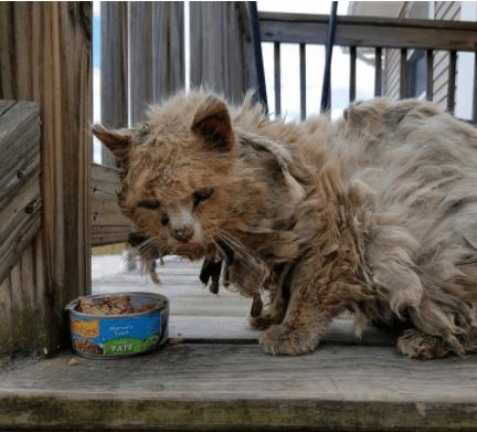 『ひどく汚れている野良猫がいます。助けてあげて下さい』野良猫を幸せに導いた住人たちの一報