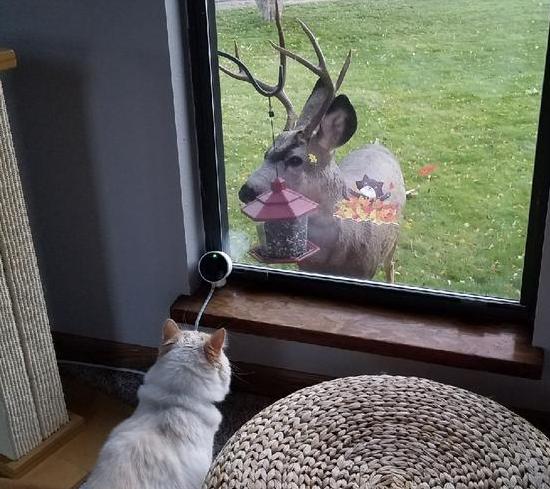 彼の家族になった猫は自宅の窓でたくさんの野生動物と挨拶を交わすのが日課になった。