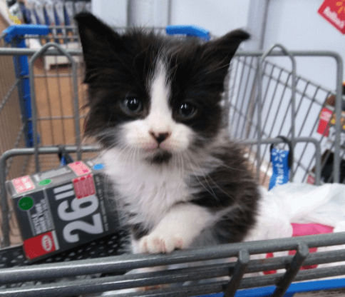 バスに乗って出かけたら、ベビーカーに乗った子猫と出会った彼女。元気な子猫は彼女と買い物に行きました♪