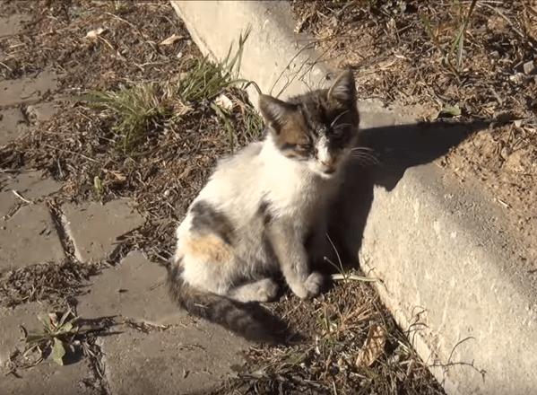 通りから規則的な子猫の鳴き声が聞こえた。ゴミ箱の下から出てきた子猫は彼に向かって走ってきた。