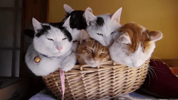 「へい!お待ち!猫盛り一丁!!」カゴにいっぱい!!てんこもりすぎる猫ちゃん達ww