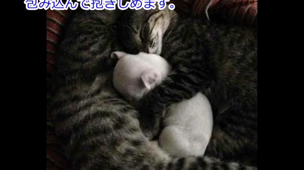 母犬に食べられた兄弟達を見てきた子犬。次は自分の番だと諦めたところを救ったのは2匹の猫ちゃんでした