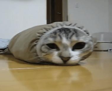 服の袖に入ってコロコロ!イモムシな猫ちゃんが可愛すぎる♪