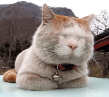 畑でコロコロしていたら白猫からグレー猫になっちゃた猫ちゃんw顔の模様が可愛すぎますww