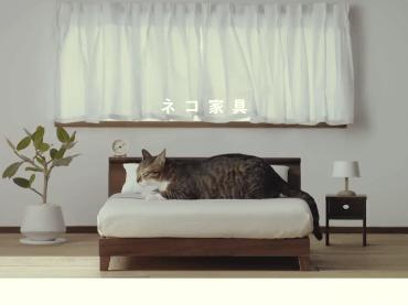猫ちゃんにも良質な家具を!家具を作る職人さんが「ネコ家具」を作っちゃいました!!