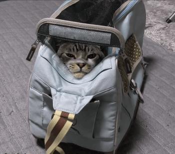 動物病院に行く為にキャリーバッグに入れられちゃったリキちゃん!脱走したり抵抗する姿が可愛すぎますw