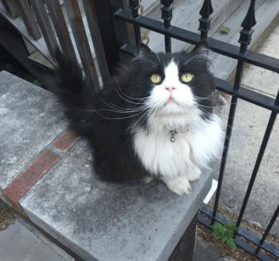 彼を見かけたら誰だって友達になりたいって思う!毎日自宅の石段に座り近所の人々に挨拶をするタキシード猫。
