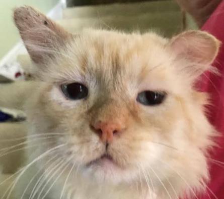 姿を消していた野良猫が重傷を負って戻ってきた・・・苦痛の表情を浮かべる猫を幸せに導いた人々