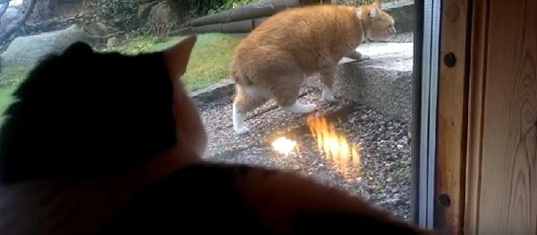 「アレって何?猫だよねー?」超スローモーションで歩くにゃんこを驚愕で固まって眺めるにゃんこ(笑)