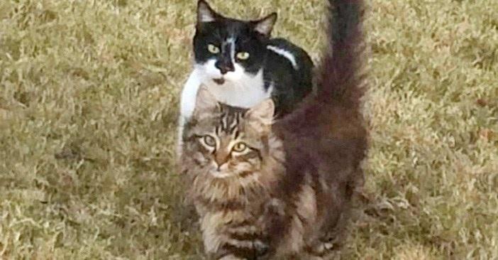 いつもごはんをくれる女性のところへ我が子を連れてきた野良猫。1年かけて保護に成功。保護から一夜明けると思いがけない光景が待っていた…