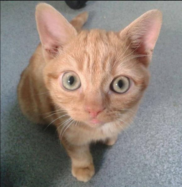 最悪の状態で発見された子猫に見つかった足の異常。手術不可能と言われても諦めずに支え続けた人間のママ