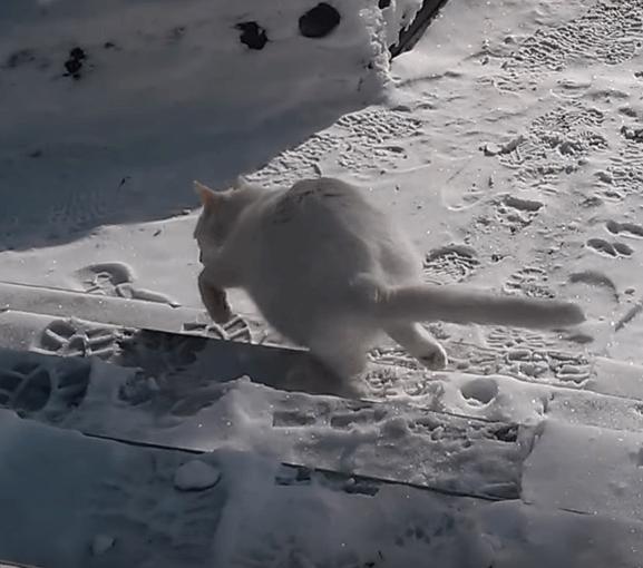 日課のお散歩にでかけようとした猫。だけど外は-20℃!極寒の銀世界だった・・・
