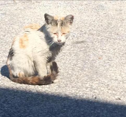 廃車置き場に住む野良猫の中に1匹の油まみれの子猫を発見!子猫をセーターにくるんで一晩中抱きしめたら・・・