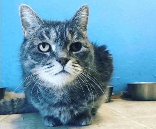 『あなたのせいじゃないわ。あなたは愛されているのよ。』心を閉ざし3年以上施設の暮らしに馴染めなかった猫