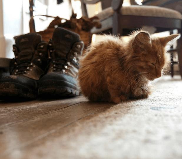 仕事で訪れた森の中で、お腹を空かせてふらふらと寄ってきたやせっぽちの子猫が私の脚にしがみついてきた・・・